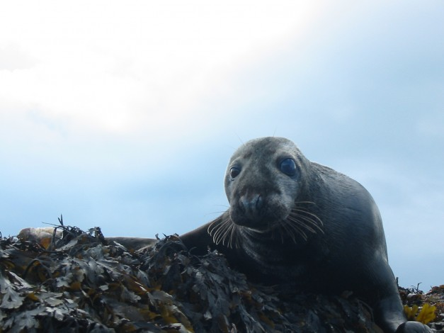Up close personal with one of our locals Raasay Rhona Kayak Expedition